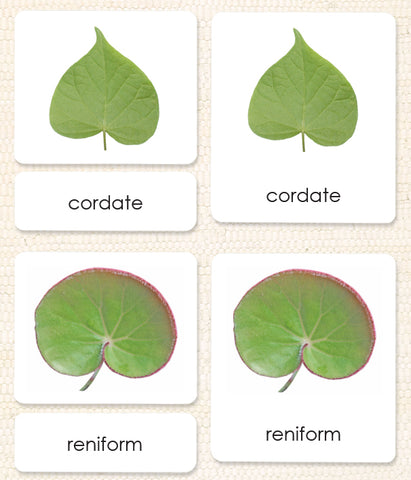 Imperfect Leaf Shapes (Botany Cabinet) 3-Part Reading - Maitri Learning