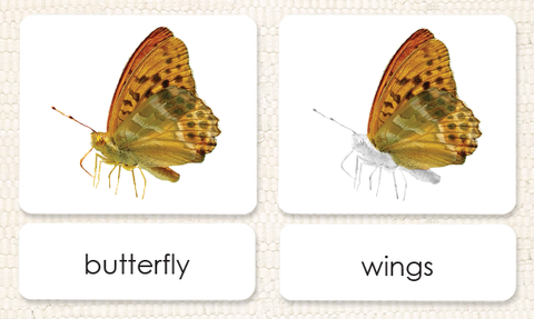 """Parts of"" the Butterfly<p>3-Part Reading - Maitri Learning"