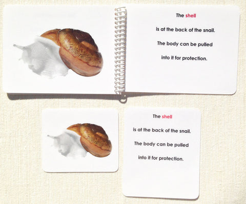 """Parts of"" the Snail Book & Card Set - Maitri Learning"