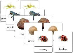 Invertebrates 3-Part Zoology Starter Set - Maitri Learning