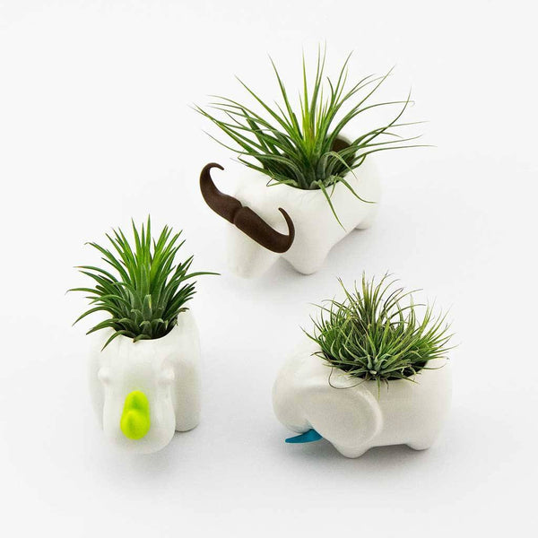 Decor - Animal Planter