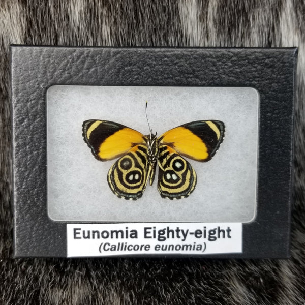Eunomia Eighty-Eight Butterflies