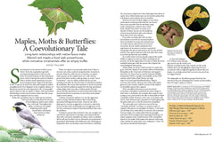 Wild Seed Magazine Volume III: Maples, Moths and Butterflies