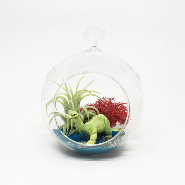 Dinosaur Air Plant Terrarium Kit