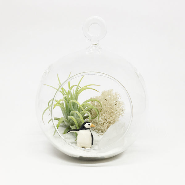 Penguin Air Plant Terrarium Kit