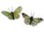 Beautiful Decorative Butterflies in Greens (Assorted Set of 25)