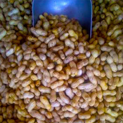 In-Shell Green Raw Peanuts