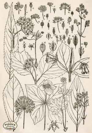 Black & White Leaves Pdxc11419 Engraving