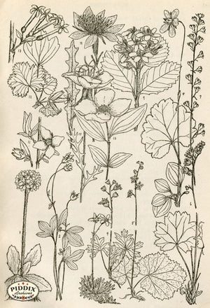 Black & White Leaves Pdxc11421 Engraving