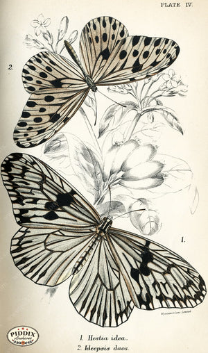 Pdxc4341 -- Butterflies Color Illustration
