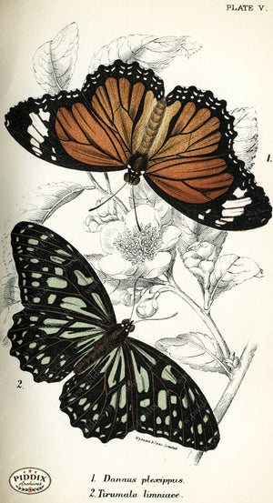 Pdxc4342 -- Butterflies Color Illustration