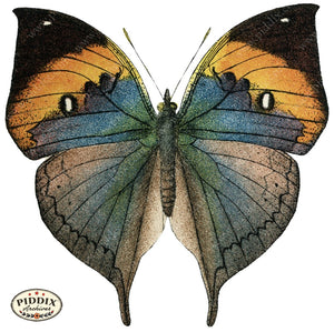Pdxc4357A -- Butterflies Color Illustration