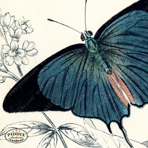 Pdxc4386B -- Butterfly Wing Details Color Illustration