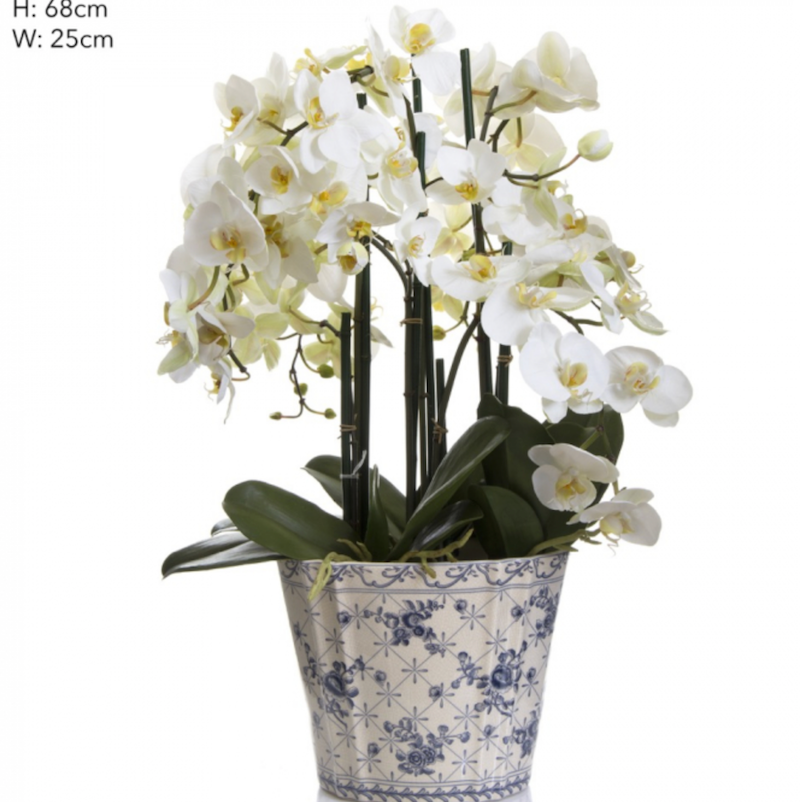 Large Phalaenopsis in Blue & White