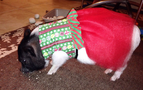 Christmas Candy Dress - Snort Life, Mini Pig Clothes