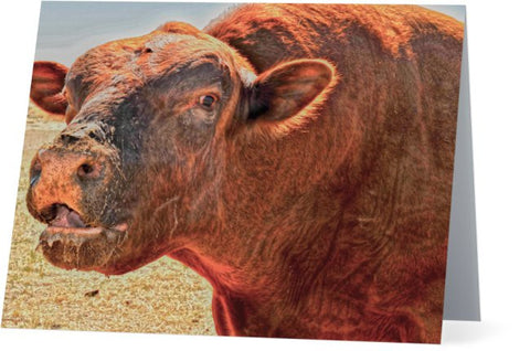 Too Close for Bull Note Cards and Greeting Cards (25 Pack)