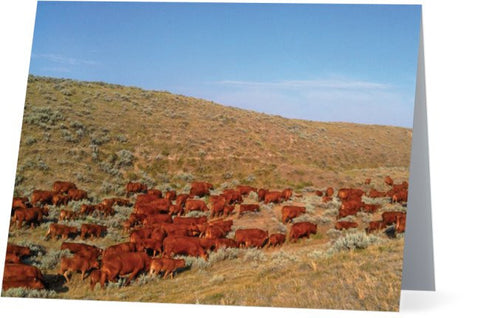 Wyoming Reds Inquiries Note Cards and Greeting Cards (25 Pack)