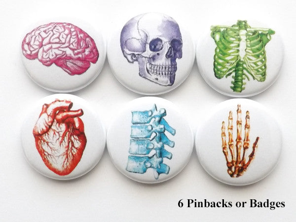 Colorful Anatomy PINBACK BUTTON pins brain anatomical heart skull med student gift graduation-Art Altered