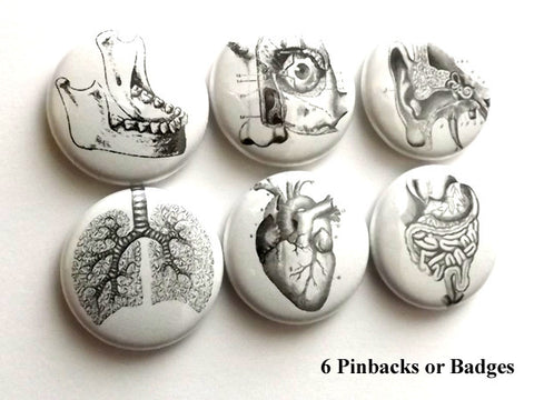 Human Anatomy PINBACK BUTTONS pins badges anatomical heart medical body-Art Altered
