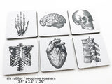 "Anatomical Theme 3.5"" neoprene human body medical gift skeleton skull brain-Art Altered"
