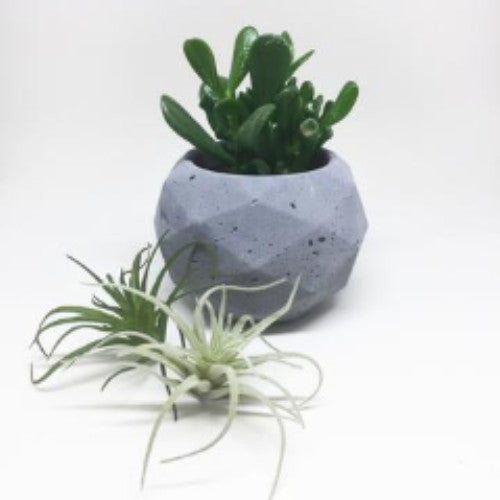 Geometric Sphere Planter