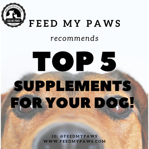 Top 5 Supplements for your Dog