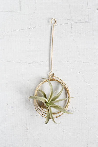 Medium Brass Hanger + Plant
