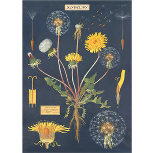 Dandelion Chart Wrapping Paper / Poster