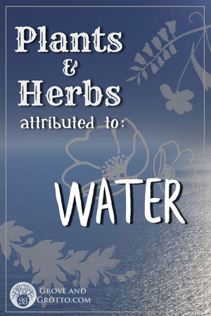 What plants and herbs are attributed to Water?