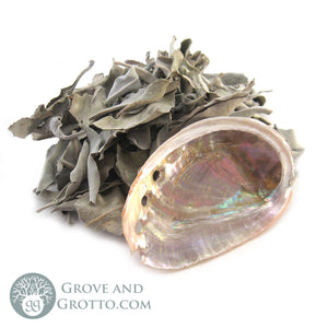 Loose White Sage with Mini Abalone Shell