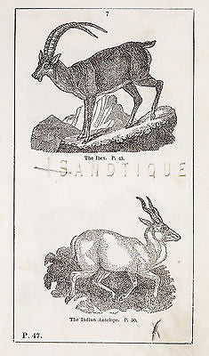 """HISTORY OF THE EARTH"" by Goldsmith - 1810 - THE IBIX & THE INDIAN ANTELOPE - Sandtique-Rare-Prints and Maps"