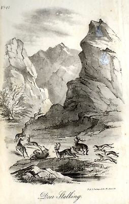 """Animated Nature"" by Goldsmith -1838- DEER STALKING - Sandtique-Rare-Prints and Maps"