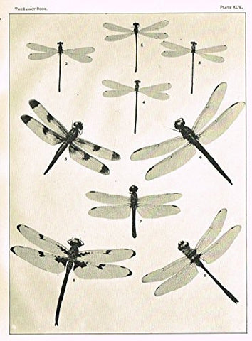 Howard's The Insect Book - DRAGON FLIES- PLATE XLV - Lithograph - 1902