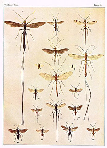 Howard's The Insect Book - ICHNEUMON AND CHALCIS FLIES - Lithograph - 1902