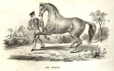 """Animated Nature"" by Goldsmith -1838- SPORTS - HORSE - Sandtique-Rare-Prints and Maps"