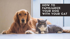 How to familiarize your dog with your cat