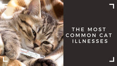 The most common cat illnesses