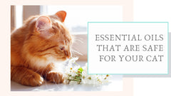 Essential Oils that are Safe for Your Cat