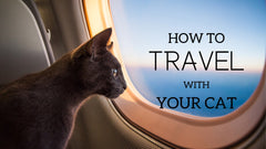How to travel with your cats