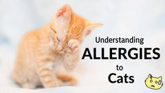Understanding allergies to cats