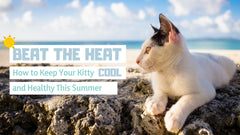 Beat the Heat: How to Keep Your Kitty Cool and Healthy This Summer