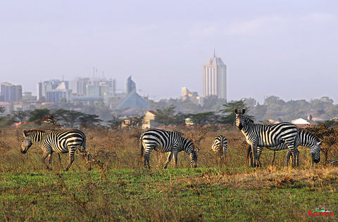 STT 001B: Nairobi National Park | Bomas of Kenya | Giraffe Center - 2 Days
