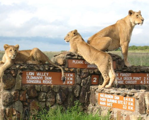 Nairobi National Park | Animal Orphanage (Approx. 4 hrs)