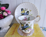Rosina Birds Cup And Saucer Blue Winged Parrots 1950s English Bone China