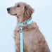 Aqua Gingham Leash