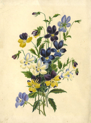 Beatrice G. Drummond, Posy of Pansies - Original 1873 watercolour painting