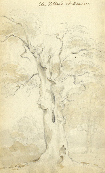 Circle of John Varley, Elm, Benacre Suffolk -Early 19th-century graphite drawing