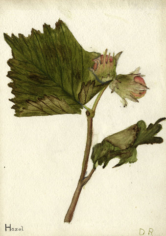 Geometric Hazel Flower - Original early 20th-century watercolour painting