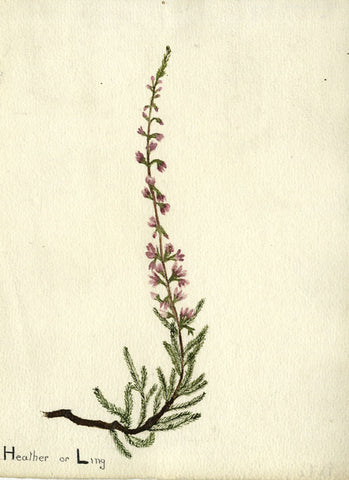 Singular Heather Branch - Original early 20th-century watercolour painting