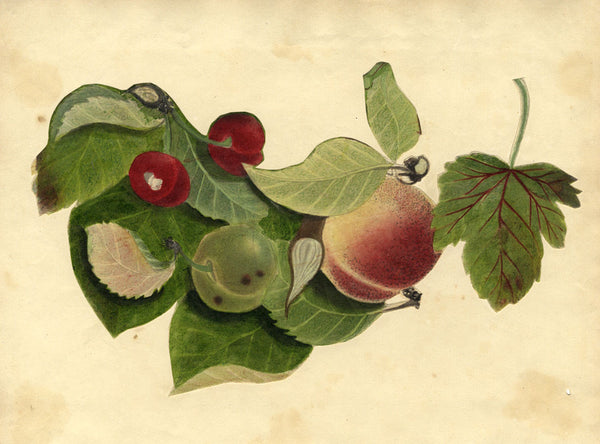 Peaches and Cherry Fruit Study - Original early 19th-century watercolour painting